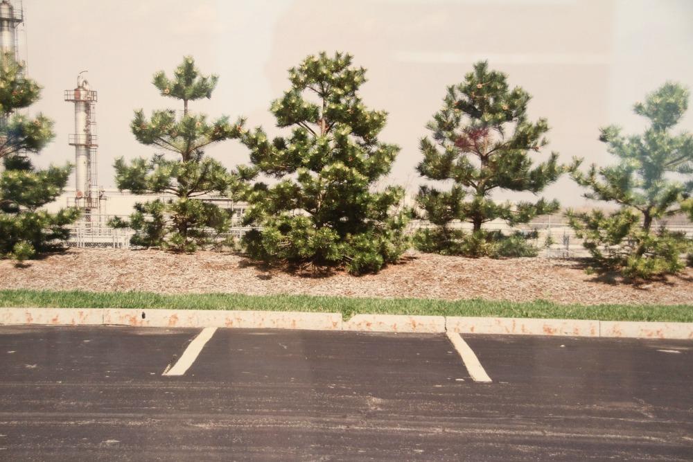Head On- Trees