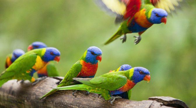 FEATHERED FRIENDS – A CELEBRATION OF AUSTRALIAN BIRDS @ PLATFORM 72 GALLERY ST LEONARDS